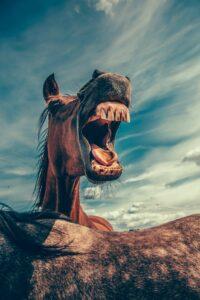 fogreszelésre szoruló ló