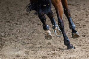 Lóvásárlás: vizsgálat mozgás közben